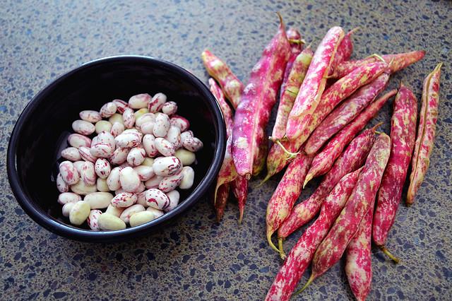 Berlotti Shell Beans