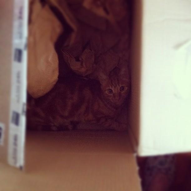 Caixa enorme de papelão (onde veio a encomenda do portátil), o melhor brinquedo para os gatos.