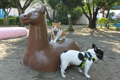 Chikuwa and Chato riding a horse