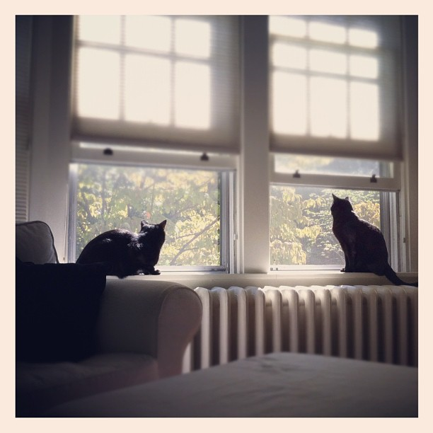 I think they love having the windows open as much as we do.