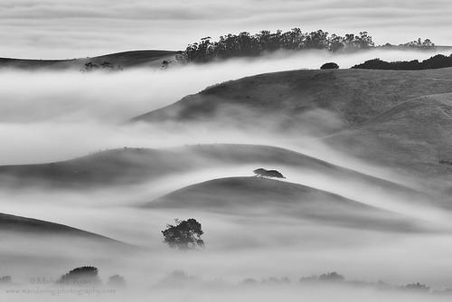 county white black fog photography michael ryan marin hill sonoma hills wilson petaluma rolling wanderingiphotograhpy michaelryanphotography