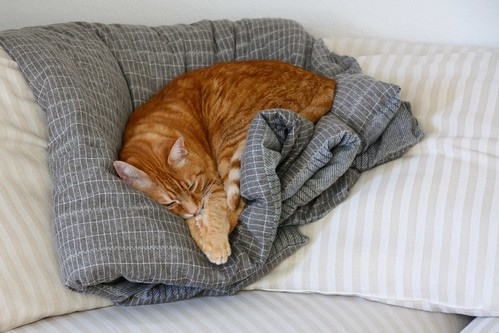 Thomas napping
