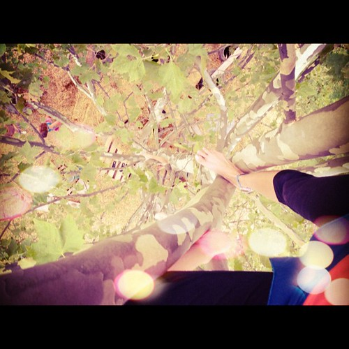 Top of the #tree ...one of my happy spots #climbing #play