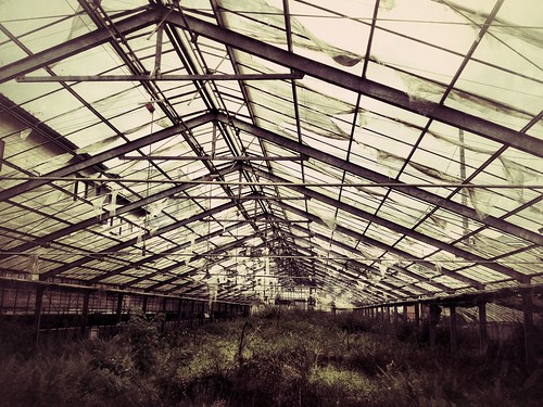 An abandoned greenhouse
