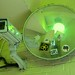 Green surveillance