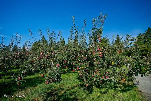 蘋果園 - Apple orchard - Fushoushan farm