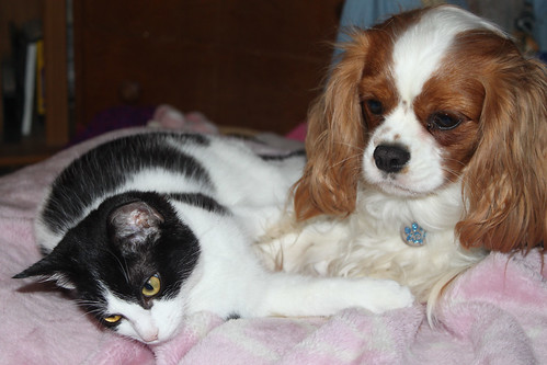 Tilly (Kitten's mother) with her best friend Ernie by Stocker Images