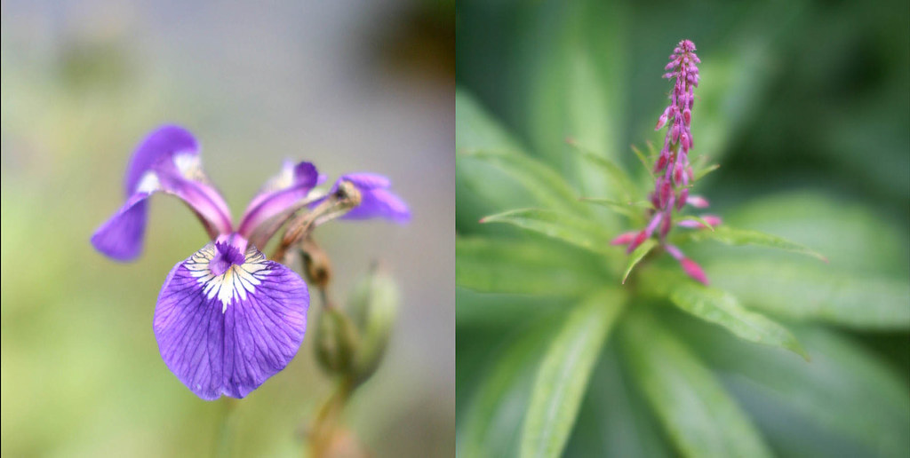 akflower