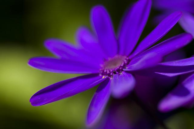 Purple Glory 15th-September-12