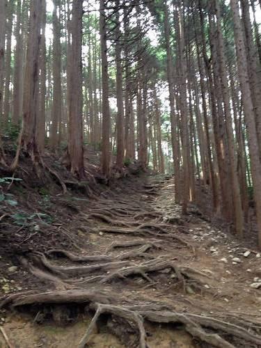 金剛山登山(高天彦神社から)-09