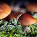 Mini mushrooms jungle by ClickSnapShot