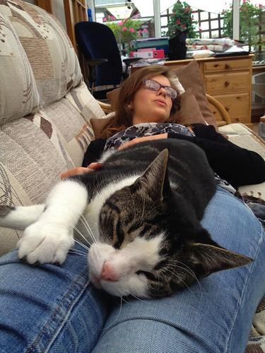 Comfy cats!