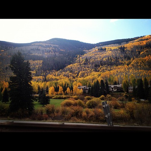 Yellow trees!! #vail