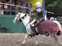 animal sports, equestrian sport, sports,