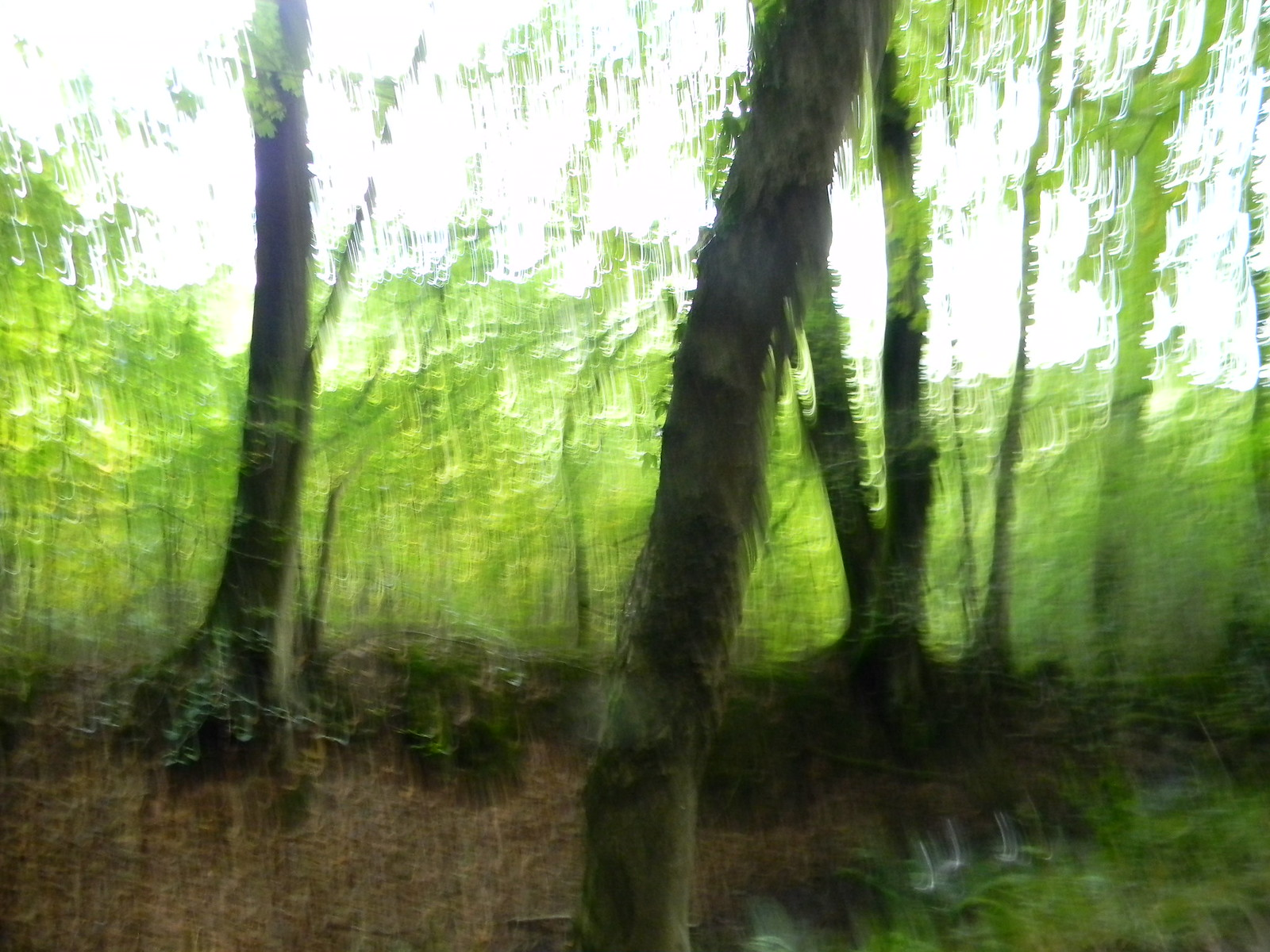 "Trunks My camera was having an ""impressionist"" day. Haslemere Circular"