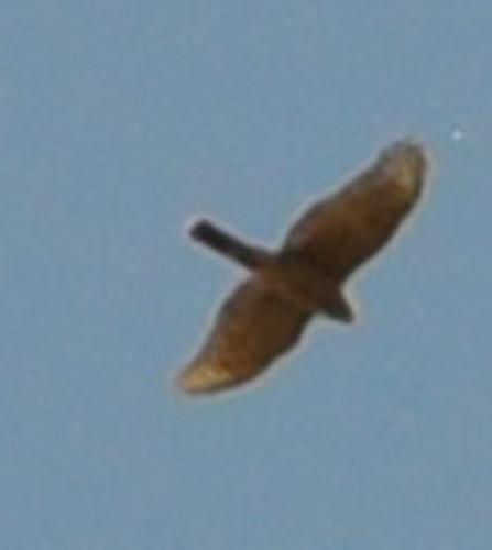 raptor easternwashington perchpointarea photographerlaurelparshall