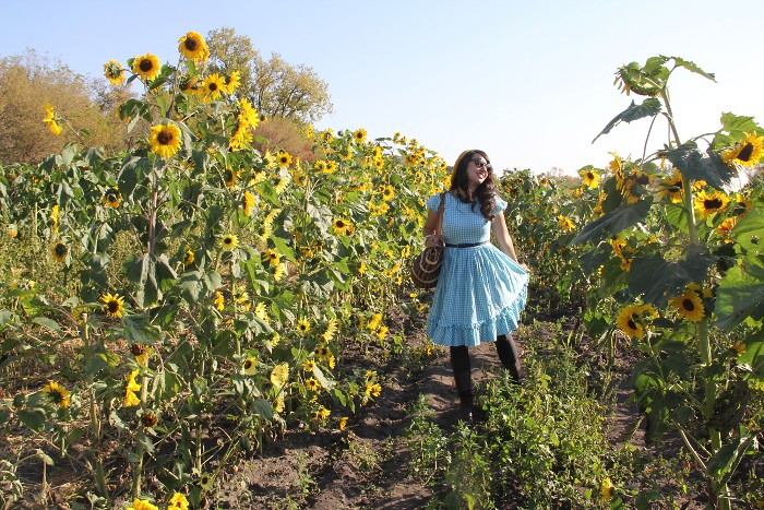 thriftaholic_sunflower_field