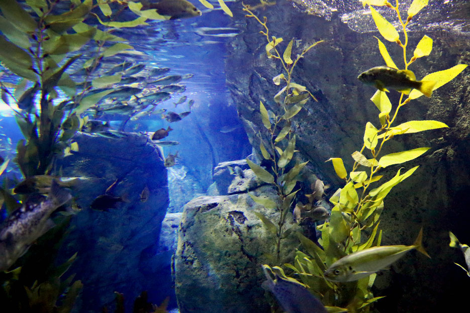 093012_aquarium07