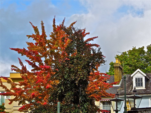 Autumn Colours in Town ....(276/366) by Irene.B.