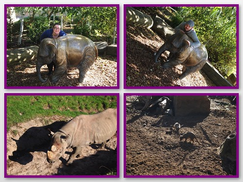 chester zoo 1