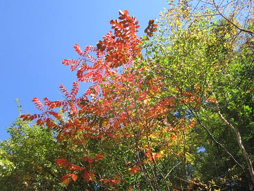 別荘地の紅葉① 2012.10.5 by Poran111