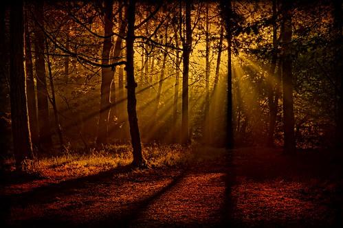 wood trees sun holiday leaves yorkshire halifax crags calderdale harcastle llgeoff bestcapturesaoi elitegalleryaoi