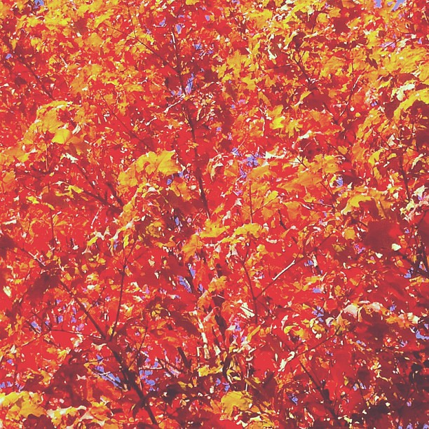 symphony of red leaves