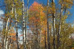 Marion Brooks Natural Area (5)