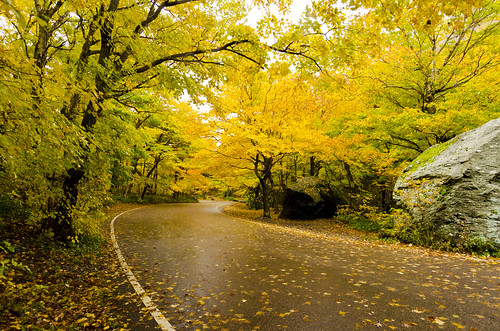 road nature colors yellow vermont fallfoliage vt smugglersnotch