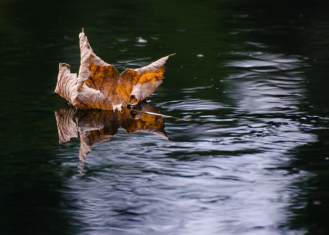 Autumn along Río Sella