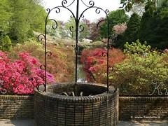 Dutch Tulips, Keukenhof Gardens, Holland - 0701