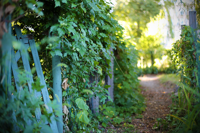 exploring fenway gardens
