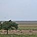 Etosha National Park impressions, Namibia - IMG_3068_CR2_v1