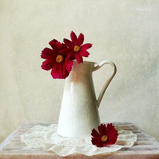 Still Life & Red Flowers