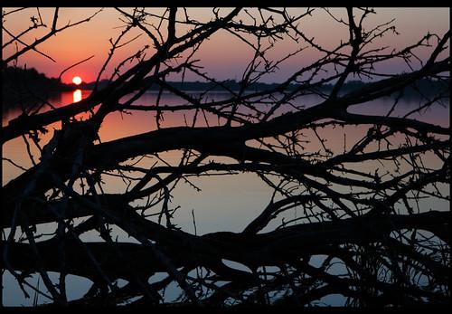 sunset bw reflection tree water silhouette canon 2470mml illinois dslr cp polarizer horseshoelake circularpolarizer 2470mm 2470mmf28 horseshoelakepark ef2470mm bwcircularpolarizer nrbelex horseshoelakestatepark bwcp walkersisland hoseshoelake 5dmkiii 5diii