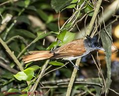 Un Known Bird