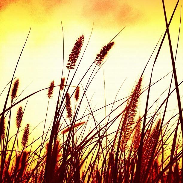#instarun #morning #run #grass #sky #skyporn #sunrise #picoftheday