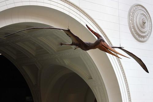 2012-08-30-5244-Pterasaur