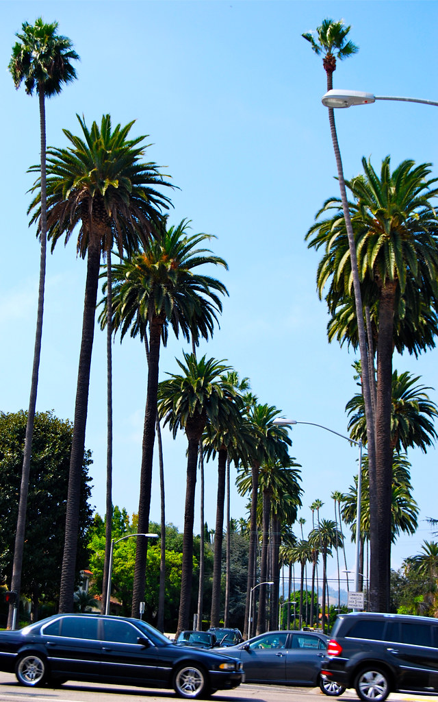 beverleypalms