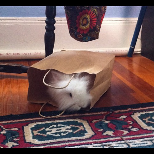 Bunny in a bag anyone?!