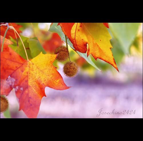 Ultimas hojas de verano
