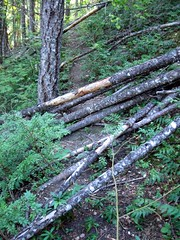 Tr#749 9/5/12.  Blowdown near Little Fish Shelter.