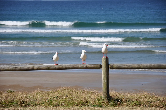 Seagulls on a bench