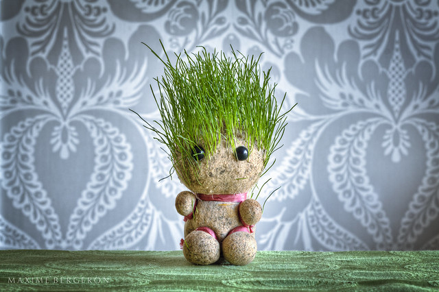 Grass Head by maximebergeron_photos
