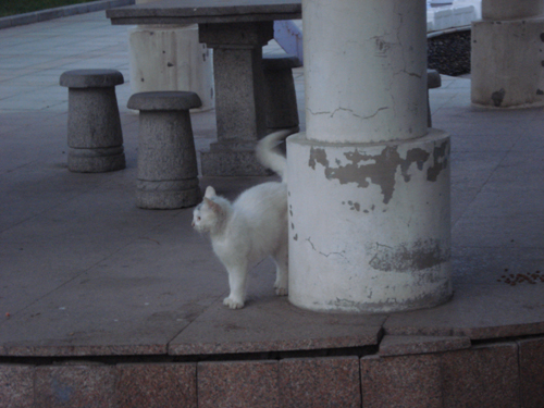 Cats in Shenyang, China _ 0151