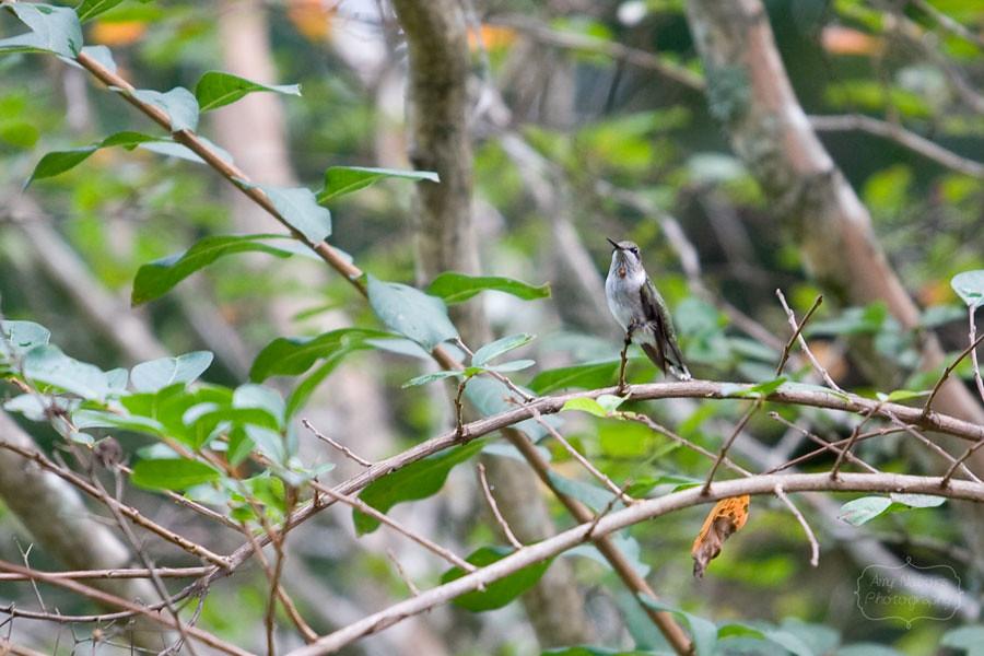 Hummingbird_Sep062012_0003