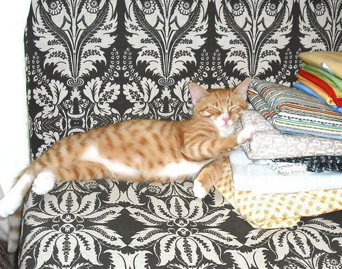 kitteh dreams of quilting!