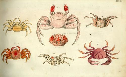 001-Â Versuch einer Naturgeschichte der Krabben und Krebse- 1790- Johann Friedrich Wilhelm Herbst- Humboldt University