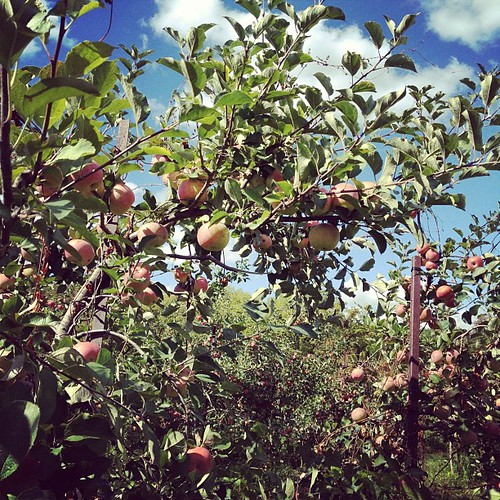 An afternoon apple picking
