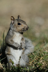 Squirrel_40142.jpg by Mully410 * Images